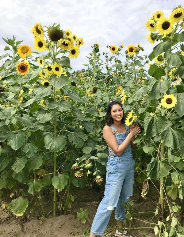 Rohini in a field of sunflowers
