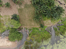 Aerial view of rice paddies and canoes