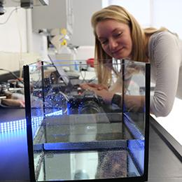 A student observes a water tank in the Ried Lab illuminated by blue light